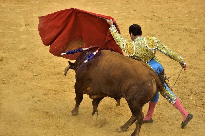 Actúa pide a Cort que haga cumplir la Ley de 'toros a la balear' para impedir la corrida de agosto