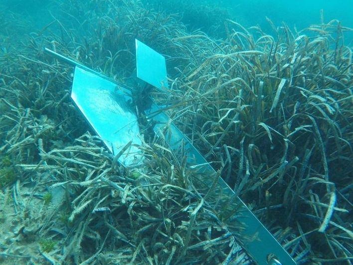 Denunciada una embarcación por fondear sobre posidonia en el Parque Natural de Ses Salines