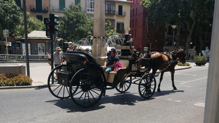 Actúa afirma que 'algo turbio hay detrás del transporte de calesas en Palma'