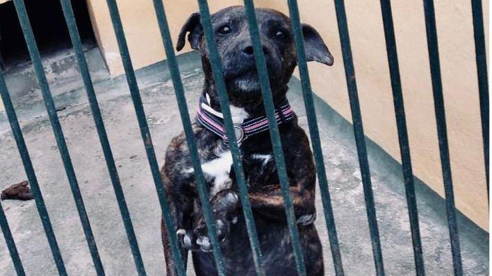 Más presión para el regidor de Benestar Animal de Palma: muere una perra en Son Reus