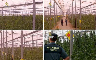 Cae una red internacional dedicada al cultivo de marihuana a gran escala