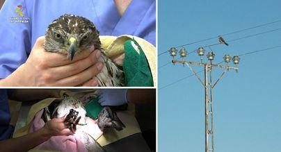 La Guardia Civil encuentra 120 aves electrocutadas e interpone 107 denuncias