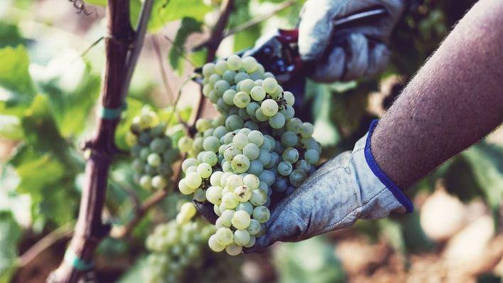 Agricultura abre 47 expedientes por mal uso de las denominaciones geográficas de productos