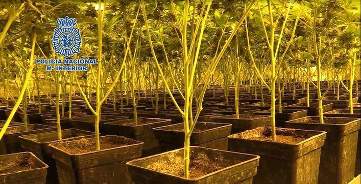 La Policía Nacional detiene a 814 personas y desmantela más de 300 plantaciones de marihuana