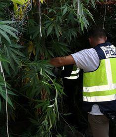 Dos detenidos en Porto Cristo por cultivar y traficar con marihuana