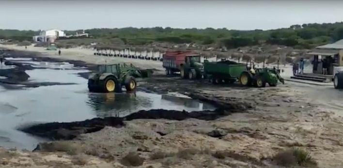 Retiran la posidonia acumulada en Sa Ràpita y Ses Covetes
