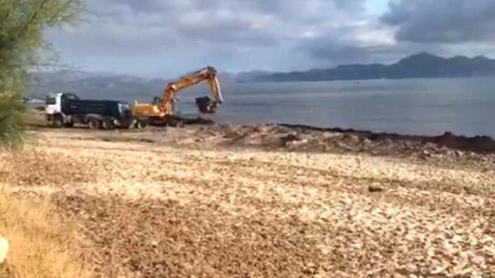 Retiran posidonia en la playa de Son Serra de Marina