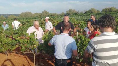 Viticultores de bodegas de Mallorca reciben formación para identificar síntomas de la xylella