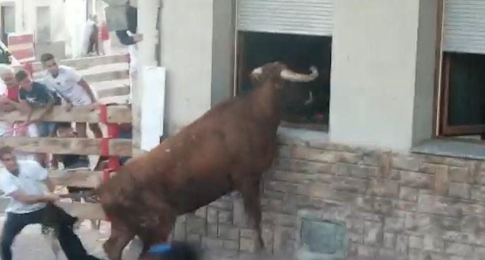 Un toro intenta entrar por la ventana de una casa en un pueblo de Navarra