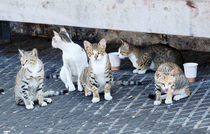 14 municipios dispondrán de subvenciones para esterilizar a gatos callejeros