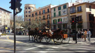 Concentración este sábado en Palma contra el maltrato animal