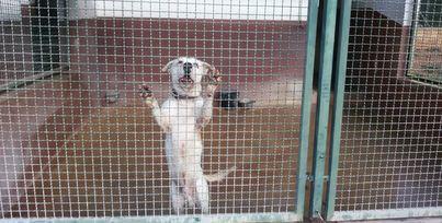 Indignación al retrasar Cort más de 90 días el plan de acogida de animales en Son Reus