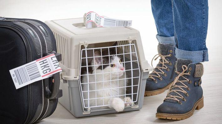 Más de la mitad de los españoles descarta viajar con su mascota por las trabas que surgen