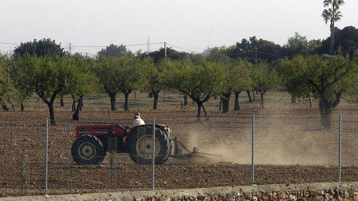 Temor en el campo balear a un hundimiento del precio del vino, el queso y el aceite
