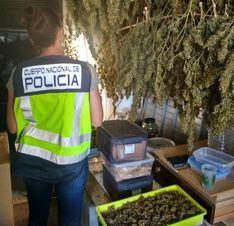 Tres detenidos con el mayor alijo de marihuana de la historia de Menorca