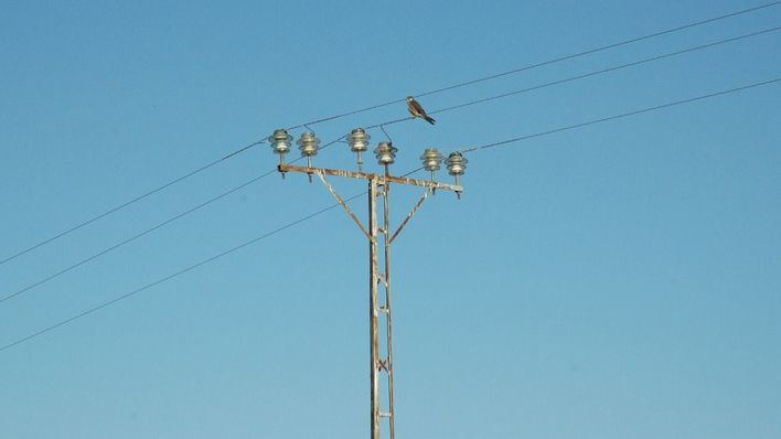 El Gobierno destina 35.680 euros para evitar la electrocución de aves en Baleares