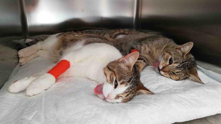Santanyí invierte 10.000 euros en esterilizar y desparasitar a 117 gatos callejeros