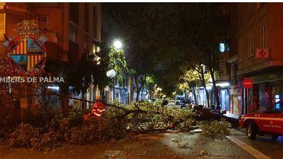 La DANA azota Baleares con fuerza y deja carreteras cerradas, árboles caídos y vuelos desviados