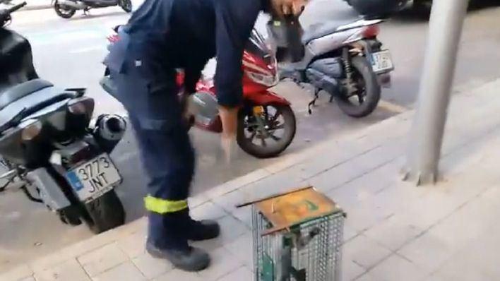 Rescatan una gata atrapada en el motor de un coche en Palma