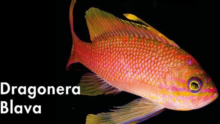 Una exposición retrata en Andratx la vida marina y terrestre de Sa Dragonera