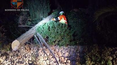 Bombers de Palma retiran un árbol caído sobre la calzada en Son Vida