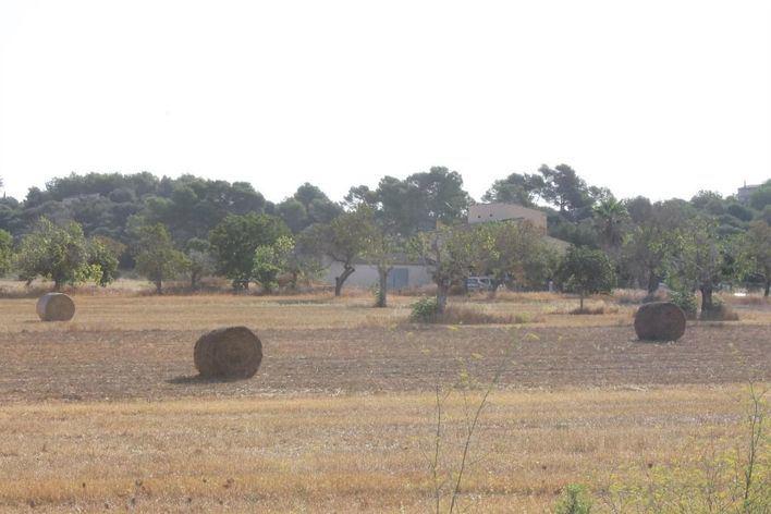 Las últimas lluvias no evitan que muchos municipios de Baleares sigan en prealerta por sequía