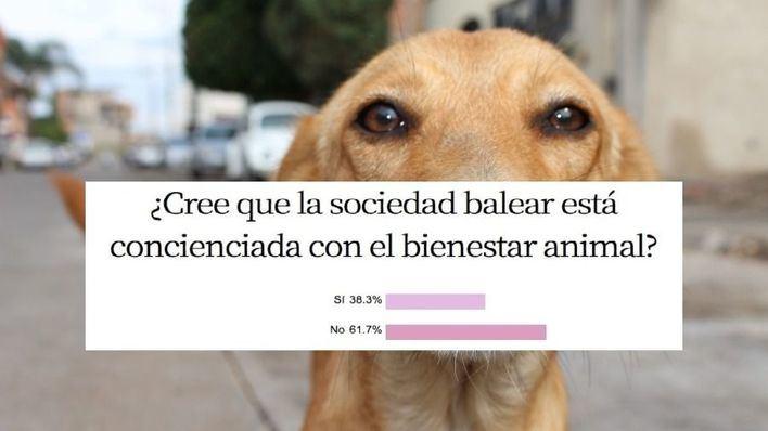 El 61,7 por cien de encuestados cree que la sociedad balear 'no' esta concienciada con el bienestar animal