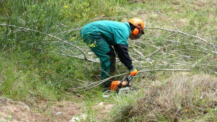 Endesa invierte más de 900.000 euros en la limpieza de masa forestal en Baleares