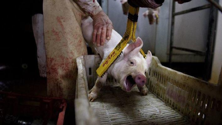 Cort no pagará la subvención del matadero porque 'ya no es su competencia'
