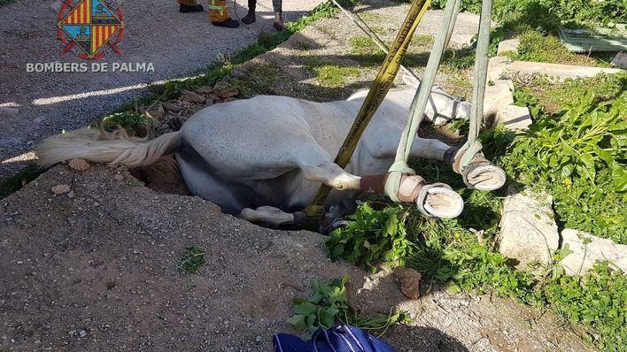 Rescatan a un caballo caído en un foso en el Secar de la Real