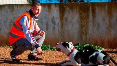 Perros acogidos en Ibiza hace dos años son trasladados a Mallorca para que puedan ser adoptados