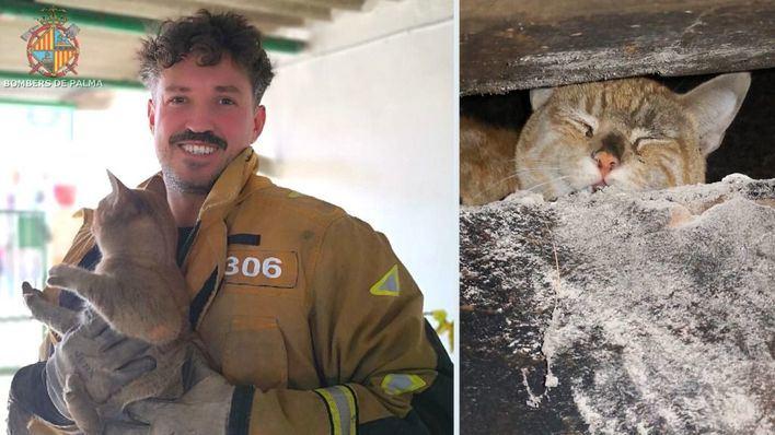 Bombers de Palma rescatan a un gato atrapado en una chimenea en Camí dels Reis