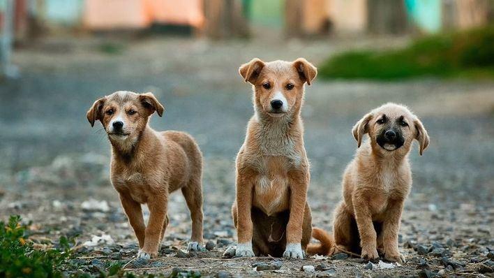 Los veterinarios analizarán como reaccionar ante el maltrato animal detectado en consulta