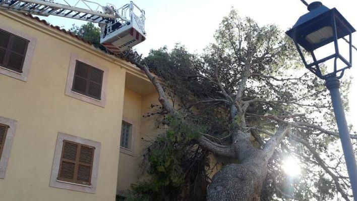 Bombers de Mallorca realizan 92 intervenciones por el fuerte viento