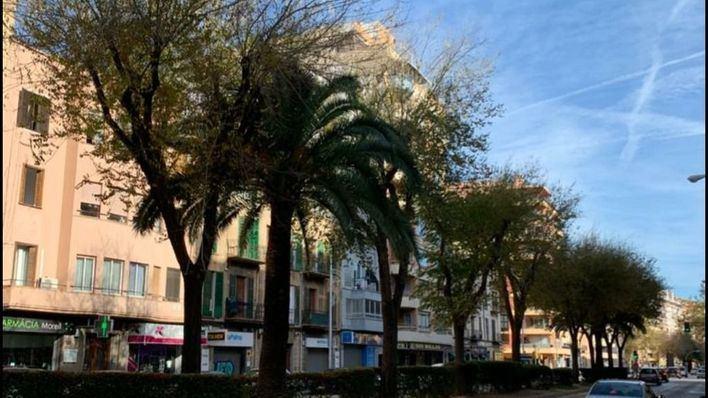 """El PP acusa a Hila de cometer un """"arbicidio"""" al talar más de 100 árboles en Palma"""