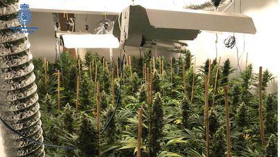 Detenido un hombre que cultivaba casi 200 plantas de marihuana en una vivienda