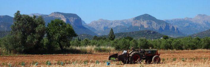 Baleares es la comunidad autónoma que menos dinero recibe de las ayudas de la PAC