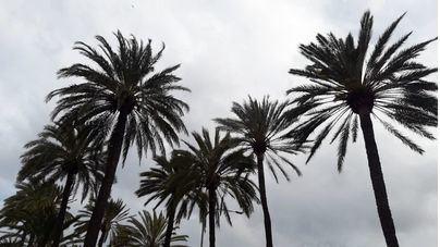 Cielos nubosos y posibilidad de heladas en la Serra para este sábado en Baleares