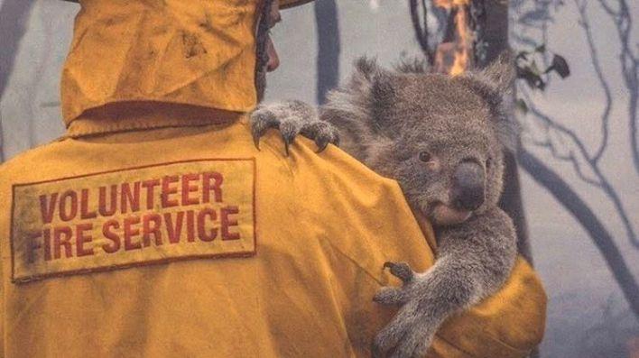 24 personas y 480 millones de animales fallecidos en los incendios de Australia