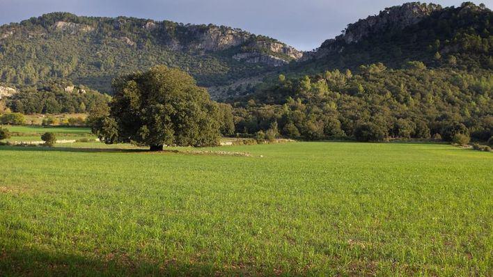 Convocan ayudas de 740.000 euros para la recuperación de la Serra de Tramuntana