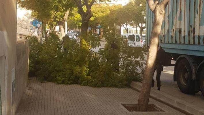 Varios transeúntes se salvan de milagro tras caer un tronco a la vía pública en Pont d'Inca