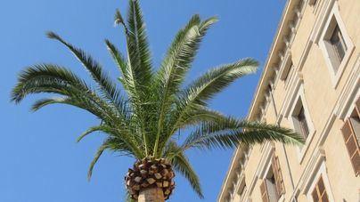 Buen tiempo en Mallorca para celebrar la Revetla de Sant Antoni