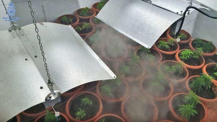 Desmantelan una plantación de marihuana en el Coll d'en Rabassa y detienen a sus responsables