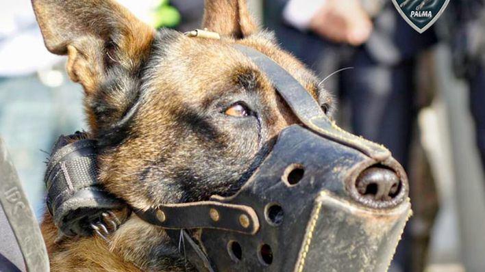Repercusión internacional de la entrega en adopción de los perros policía de Palma
