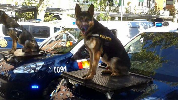 'Un perro policía no es un perro normal que se pueda dar a cualquiera'