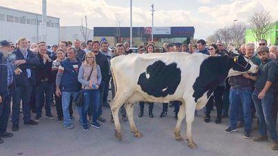Agricultores y ganaderos reclaman que se consuman productos de Baleares