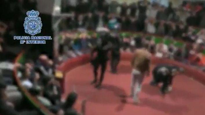 La policía interviene en una pelea de gallos en Cádiz en la que participaba gente de Baleares