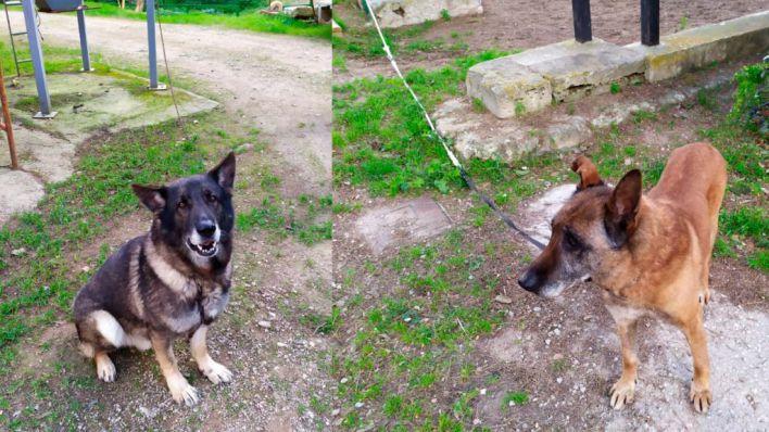 Los perros policía de Palma