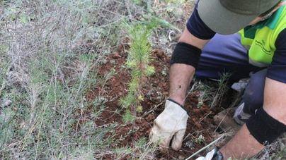 Cort organiza una siembra de árboles y arbustos en el Parc de Sa Riera