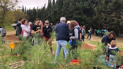 Cientos de personas plantan árboles en el Parc de Sa Riera